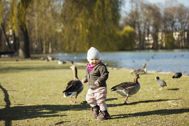Toddler girl playing with geese at a pond in park - MAEF12859
