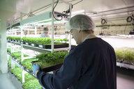 Grower inspecting cannabis seedlings in incubation - HEROF35471