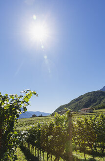 Italy, South Tyrol, Ueberetsch, vineyards of region Kaltern and Kalterer See - GWF06062