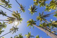 USA, Hawaii, Big Island, Pu'uhonua o Honaunau National Park - FOF10627