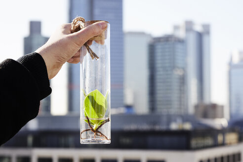 Germany, Frankfurt, hand holding plant in a jar in front of financial district - FMKF05539