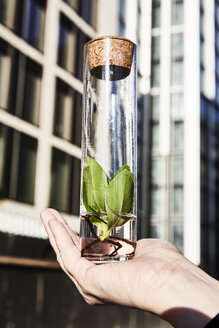 Hand holding plant in a jar in front of office building - FMKF05545