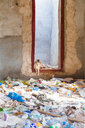 Sultanate Of Oman, Ras al Hadd, Cat in a run down house full of plastic waste - WVF01121