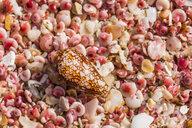 Sultanate Of Oman, Ras al Hadd , Ras al Hadd beach, pink seashells - WVF01124