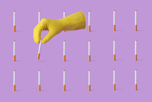 Handpicking a cigarette from a collection organized in a row over a purple background. - DRBF00152