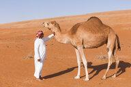 Bedouinn stroking his camel in the desert, Wahiba Sands, Oman - WVF01361