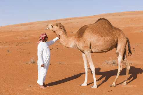 Bedouinn stroking his camel in the desert, Wahiba Sands, Oman - WVF01361