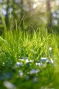 Grass at springtime - JTF01218