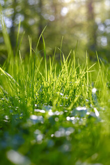 Grass at springtime - JTF01218