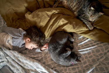 Toddler girl and two cats sleeping on bed, top view - GEMF02915