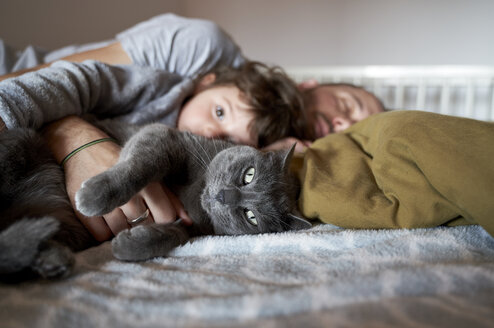 Portrait of grey cat resting on bed with toddler girl and father - GEMF02918