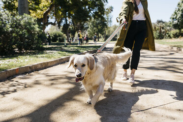 Portrait of Labrador Retriever going walkies in city park with mistress - JRFF03144