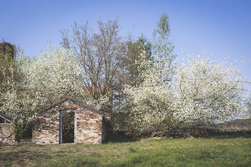 Old greenhouse in spring, Brandenburg, Germany - ASCF00994