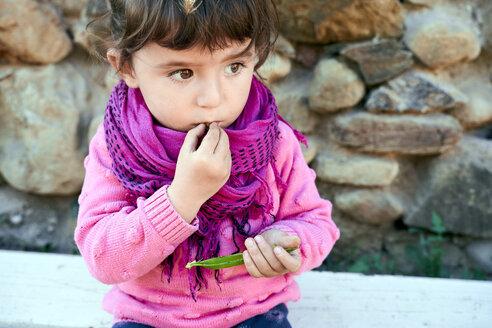Portrait of toddler girl eating fresh green peas from pod in the garden - GEMF02923