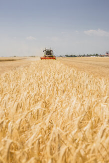 Austria, Burgenland, combine harvester on a wheat field - AIF00673
