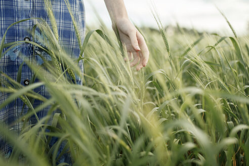 Hand of Caucasian woman in the field of wheat - BLEF00447