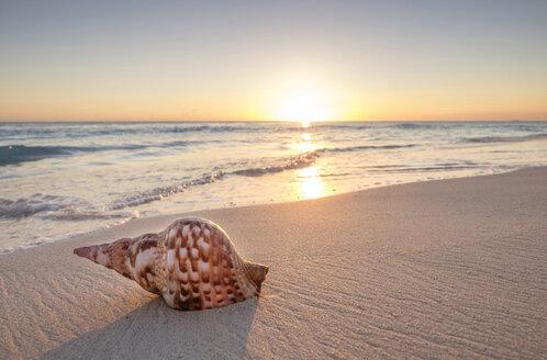 Seashell on beach at sunset - BLEF01110