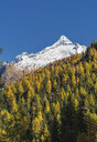 Autumn trees near snow covered mountains - BLEF01128
