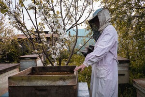 Beekeeper and bee hives - BLEF01603