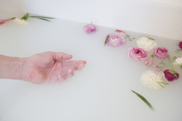 Hand of Caucasian woman in milk bath with flowers - BLEF01789
