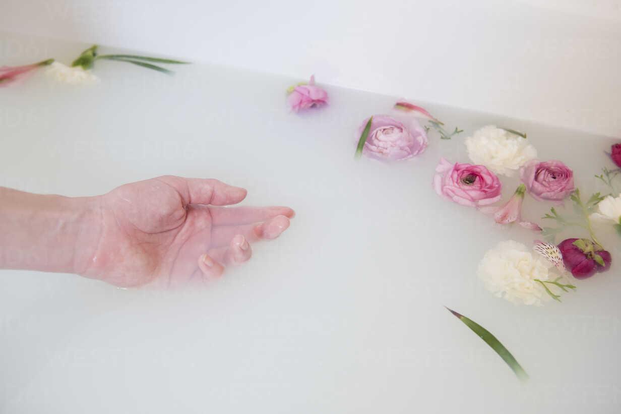 Hand of Caucasian woman in milk bath with flowers - BLEF01789 - JGI/Jamie  Grill/Westend61