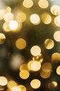 Defocused lights on Christmas tree - BLEF01811