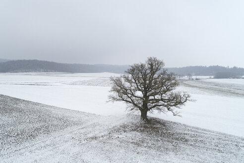 Germany, Bavaria, single old oak tree in winter landscape - RUEF02176