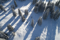 Germany, Allgaeu, snow-covered fir trees seen from above - RUEF02182