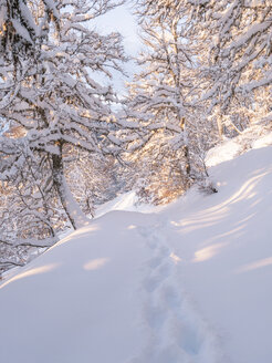 Spain, Asturia, Picos de Europa, Mirador De Piedrashistas, mountain forest in winter - LAF02283