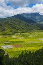 USA, Hawaii, Kauai, Taro fields near Hanalei - RUNF01927