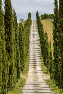 Italy, Tuscany, country lane with cypresses - STSF01961