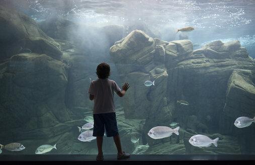 Caucasian boy leaning on aquarium tank watching swimming fish - BLEF02597