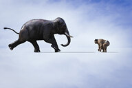 Elephant charging Sumo wrestler - BLEF02663