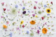 Blossoms of summer flowers on white tablecloth - ASF06395