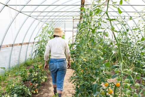 Mature female gardener walking down polytunnel, rear view - ISF21305
