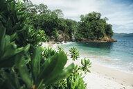 Foliage at ocean beach - BLEF03172