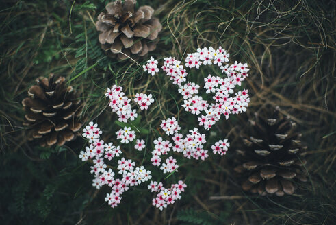 Pine cones and flowers in grass - BLEF03175
