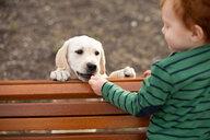 Boy giving pet puppy training treat - CUF51171