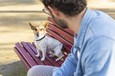 Portrait of dog sitting on park bench looking at his owner - WPEF01509