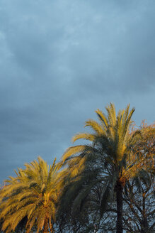 Beautiful silhouette coconut palm tree in sunset evening with clouds sky background in monochrome tone. Located in Huelva, Spain - JCMF00061