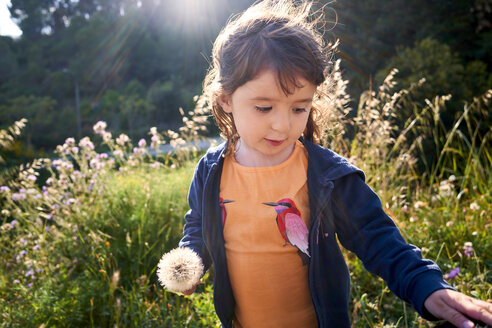 Portrait of toddler girl with blowball in nature - GEMF02968