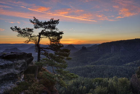 Germany, Saxony, Elbe Sandstone Mountains, pine tree with view to the mountain Winterstein from the Gleitmannshorn at sunrise - RUEF02212