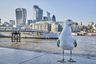 UK, London, seagull in front of River Thames and skyline - MRF01987
