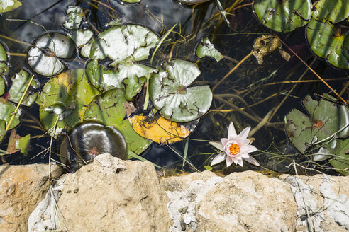 Italy, Tuscany, Pond with water lilies - OJF00337