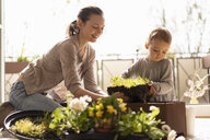 Mother and daughter planting flowers together on balcony - DIGF07037