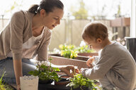 Mother and daughter planting flowers together on balcony - DIGF07046