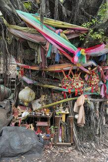 Heiliger Baum, Verehrung, am Chow Sue Kong Shrine, Duang Tawan Alley, Samphanthawong district, Bangkok, Thailand - LBF02579