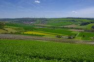 Vineyards, Schaeftersheim in Tauber Valley, near Weikersheim in Main-Tauber-Kreis, Baden-Wuerttemberg, Germany - LBF02582
