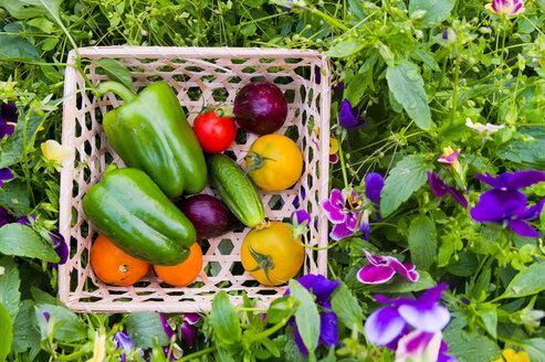 Close up of basket of fresh vegetables on flowers - BLEF04430