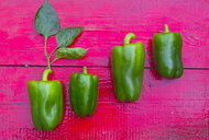 Close up of row of green peppers on red wooden table - BLEF04436